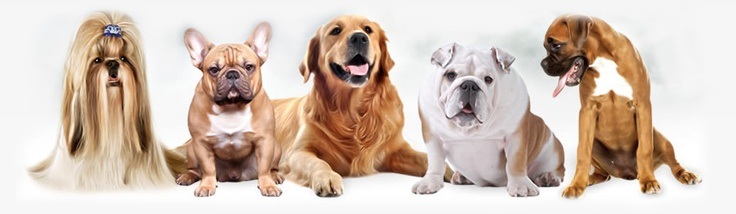 Dog Play Training Center is the one stop shop for all your pets need in Delhi and Gurgaon, providing the best Dog Boarding and Dog Training, Dog Walking facilities in Delhi NCR