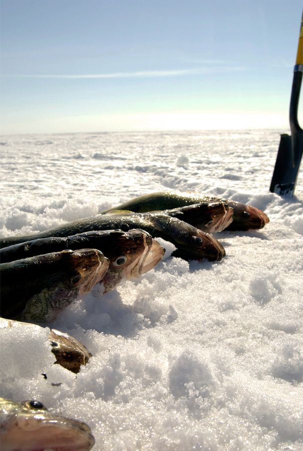 how to catch end fish ice fishing
