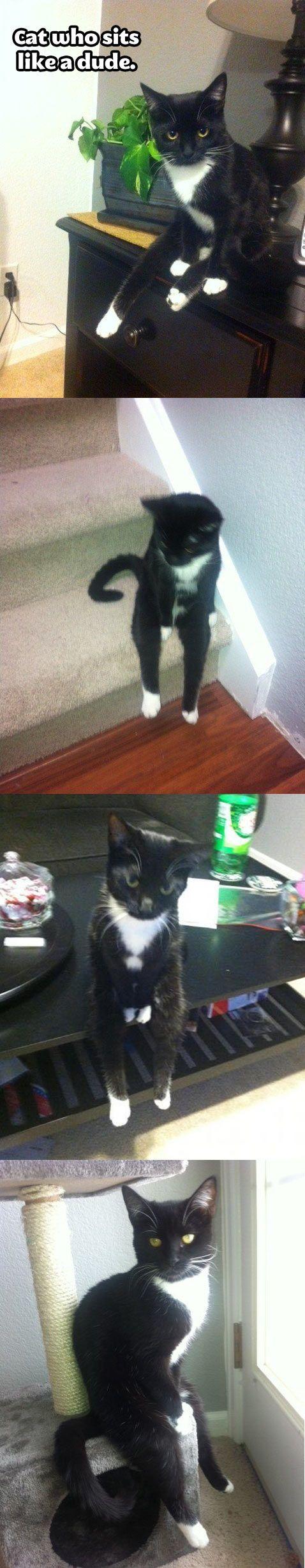 The cat who sits like a dude… WTF