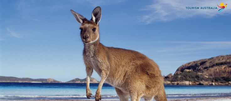 Australia tour packages | Australia Tourism Packages holiday trip from Bangalore