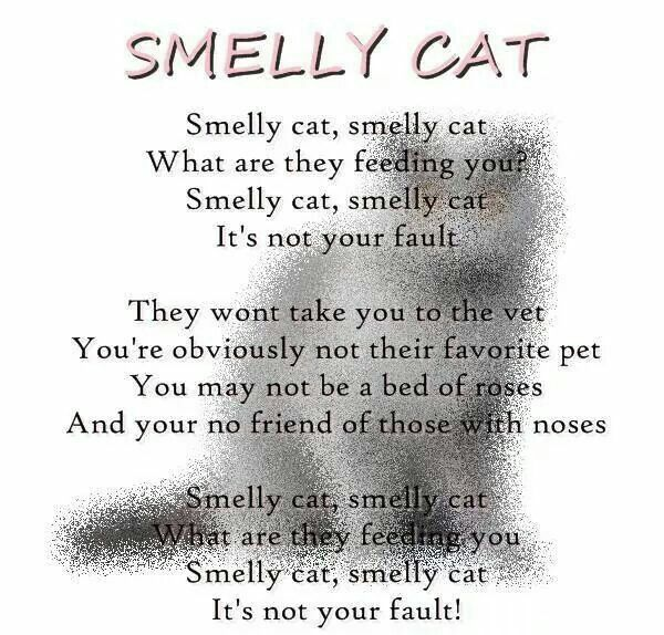 Smelly cat smelly cat what are the feeding you - Friends