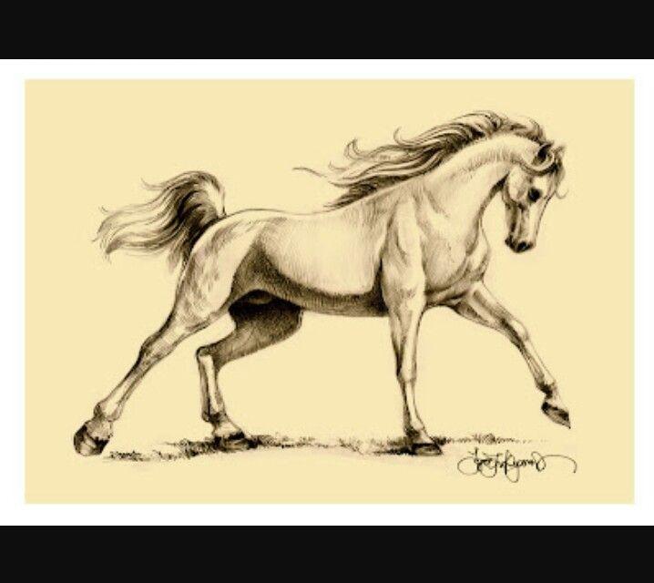 Horse realistic darwing
