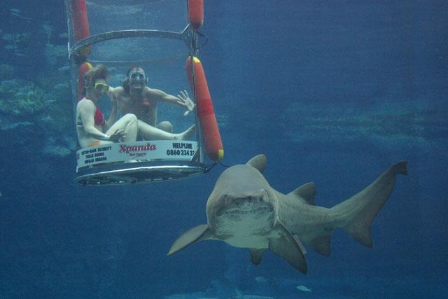 Xpanda #Shark Dive