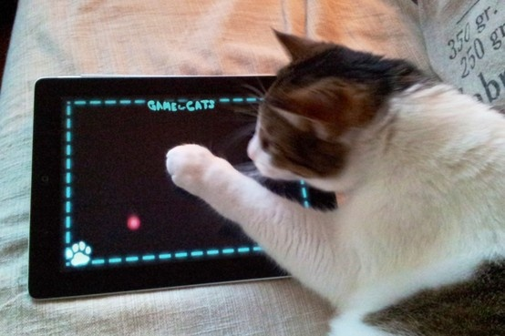 Kissakin pelaa.