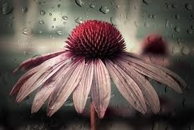 even though its raining, you can see the beauty