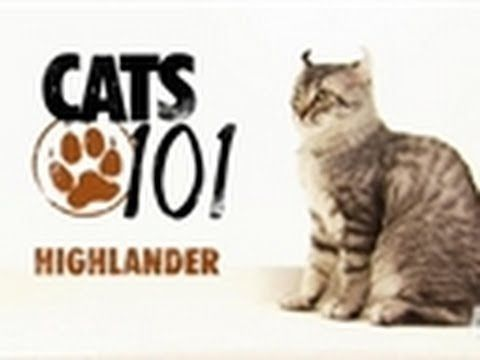 1000 images about highland lynx on pinterest lynx highlands and