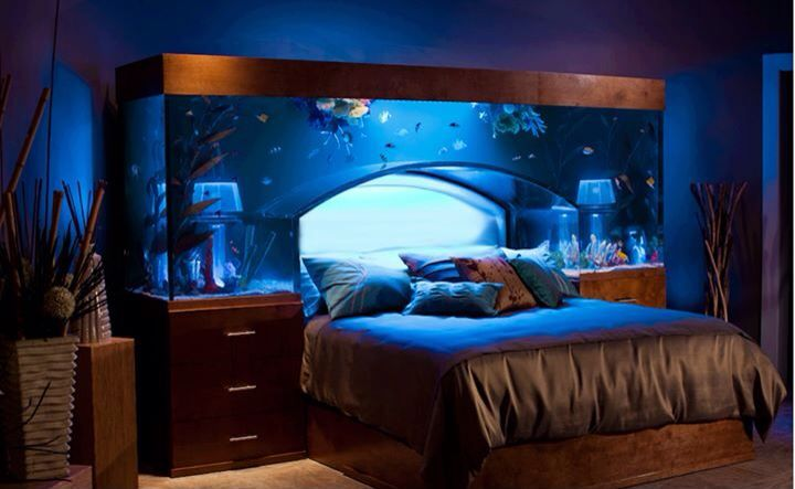 Fish tank bedroom fish pinterest for Bedroom fish tank