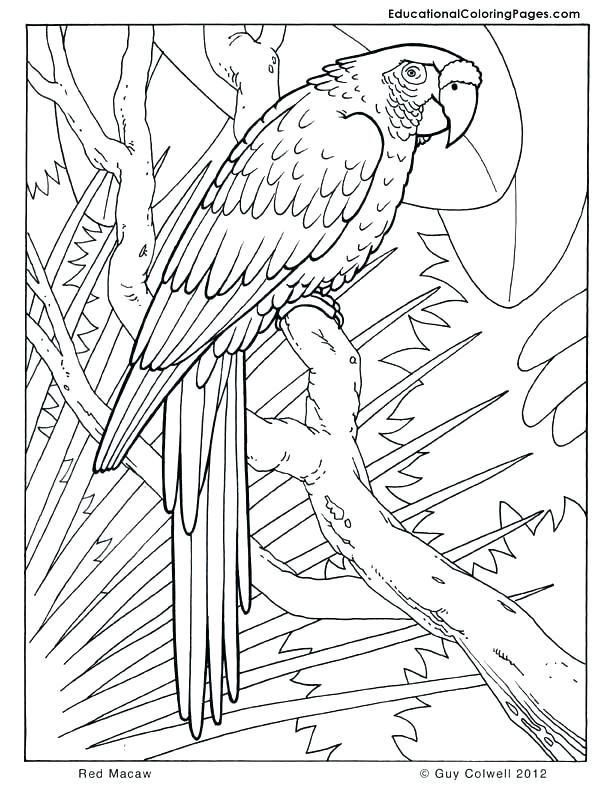 Jungle Animal Coloring Pages Safari Coloring Book Safari Coloring Book As Unique Jungle In 2020 Bird Coloring Pages Cool Coloring Pages Jungle Coloring Pages