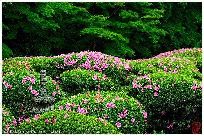 Miniature stone pagoda amon blooming rhododendrons, Shisen-do temple gardens