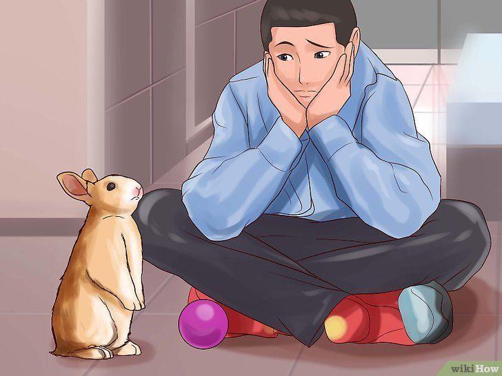 Mit Einem Kaninchen Spielen Haustiere Kaninchen Kaninchen Freigehege Kaninchen Spielzeug
