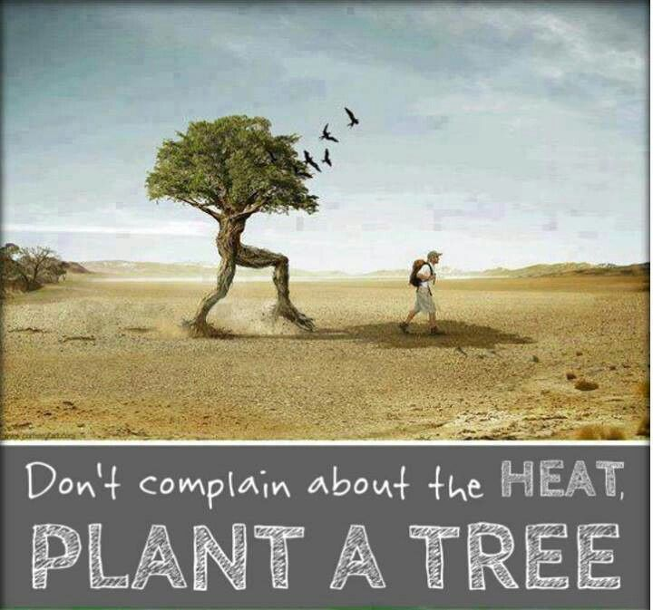 save trees quotes - Google Search