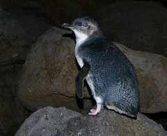 Penguins @ St Kilda