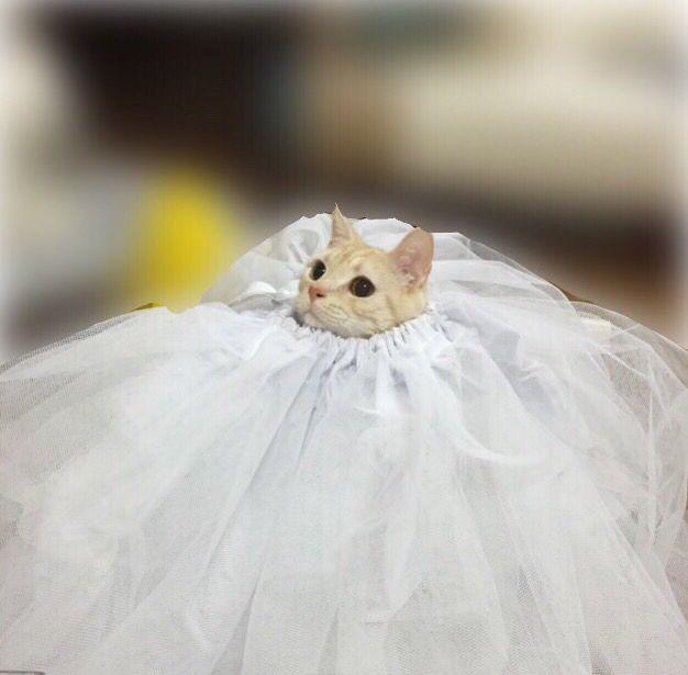 ドレスたろ(๑´ლ`๑)