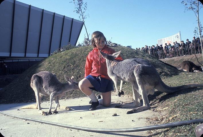 Little girl with kangaroos at the Expo 67 Safari.