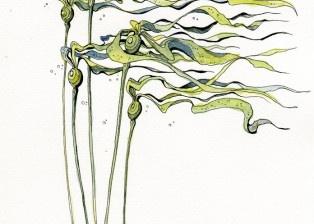 Bull Kelp by Claire Watson