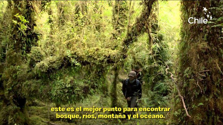 Wild Aysén