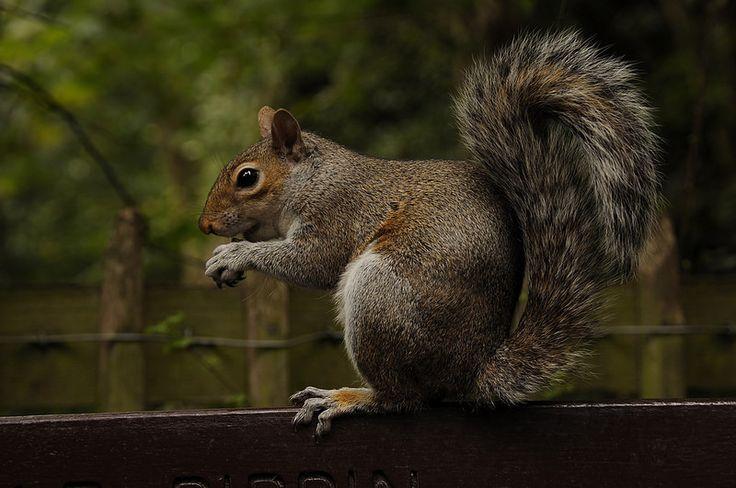 Squirrel at a city park