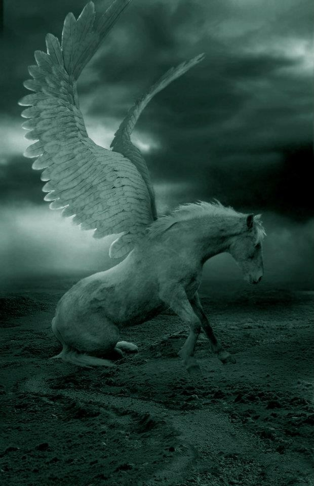 89 best Pegasus images on Pinterest | Pegasus, Winged horse and Angel