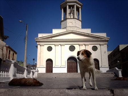Perros Callejeros Valparaiso