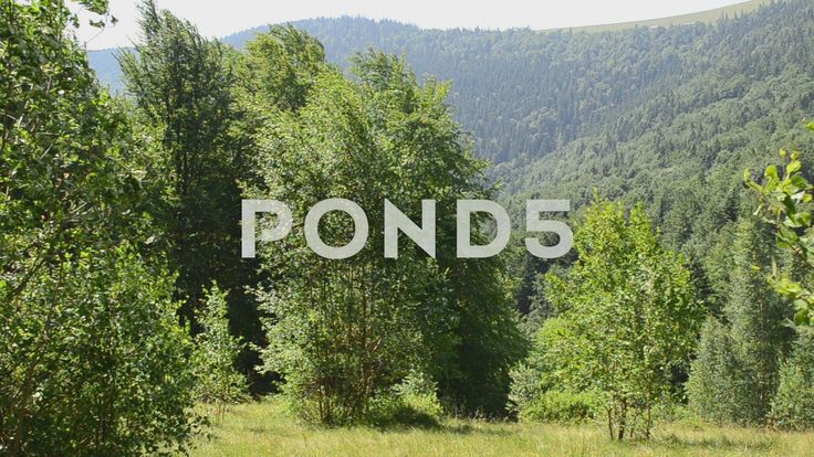 Video footage. Pond5.com. Mountains in the summer.    #area #beauty #buildings #carpathians #cloud #countryside #ecology #environment #europe #forest #from #grass #green #hill #house #inhabiting #landscape #living #meadow #mountain #natural #nature #outdoor #park #people #picturesque #plane #rural #scattered #scenery #sky #the #top #tourism #tourist #town #travel #tree #vacation #view #village #wood #summer  #Video #footage #stock #pond5