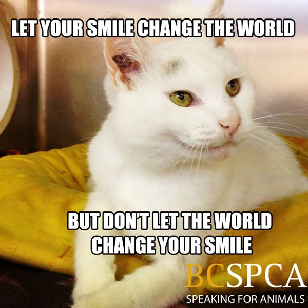 Does your life need more joy? Dame Elizabeth is always smiling and is waiting for that special someone at the BC SPCA Vancouver Branch.