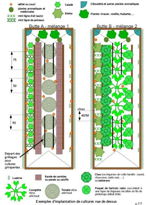 Exemples d'implantation de cultures (vue de dessus):