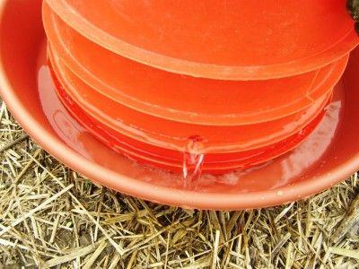 Chicken Watering Trough Homestead Dream Pinterest Chicken