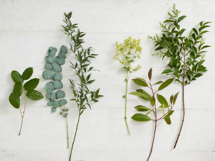 Types of Foliage for Flower Arranging - left to right: Salal, Eucalyptus, Ruscus, Alchemilla (?), (second from right I don't know) and on the right apparently is a type of privet.