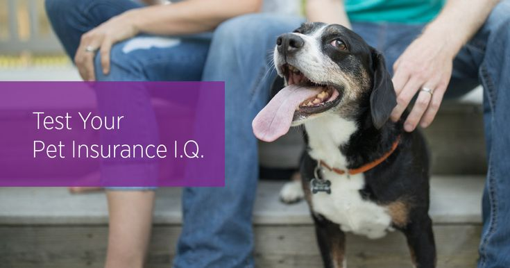 Test Your Pet Insurance I.Q. #petinsurance #quiz #embraceyourpets #petcare #pets #dogs #cats #petsafety #veterinarian #vet #veterinarymedicine