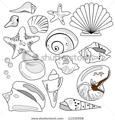 seashell illustration, black and white line drawing