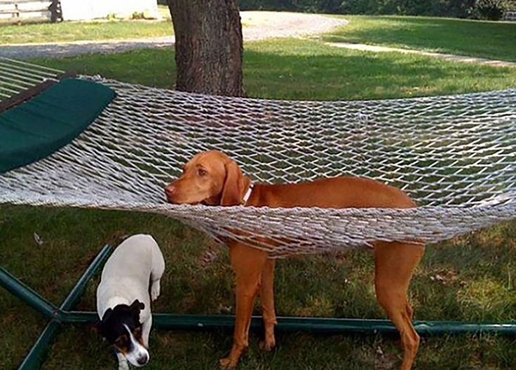I'm not sure what all the fuss about hammocks is about. #hammock #relaxing #BeggedBorrowedandStollen #gusandkeno