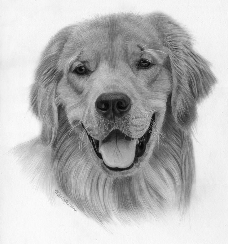 8 Best Images About Dog Drawings On Pinterest Wolves Black And White Tree Realistic