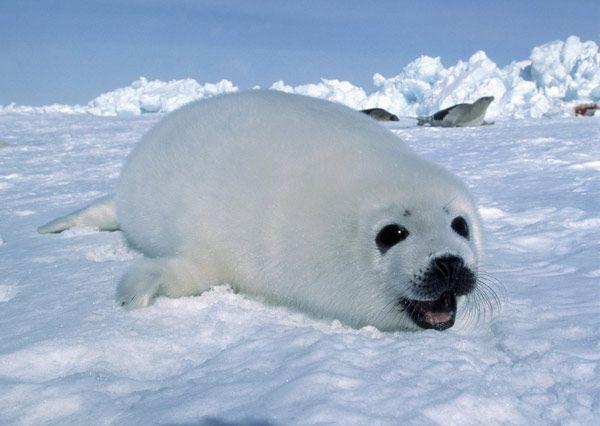 ber ideen zu arktis antarktis auf pinterest lernen montessori und runde. Black Bedroom Furniture Sets. Home Design Ideas
