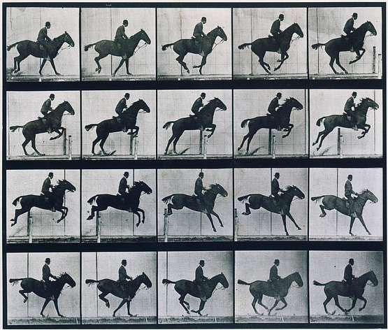 Eadweard Muybridge photography | Saut d'obstacle ( Animal locomotion).