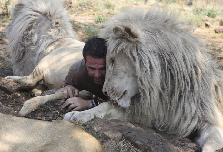 A self-taught animal behaviorist, Kevin Richardson grew up raising animals and learning to speak their language.    Read more: articles.business...
