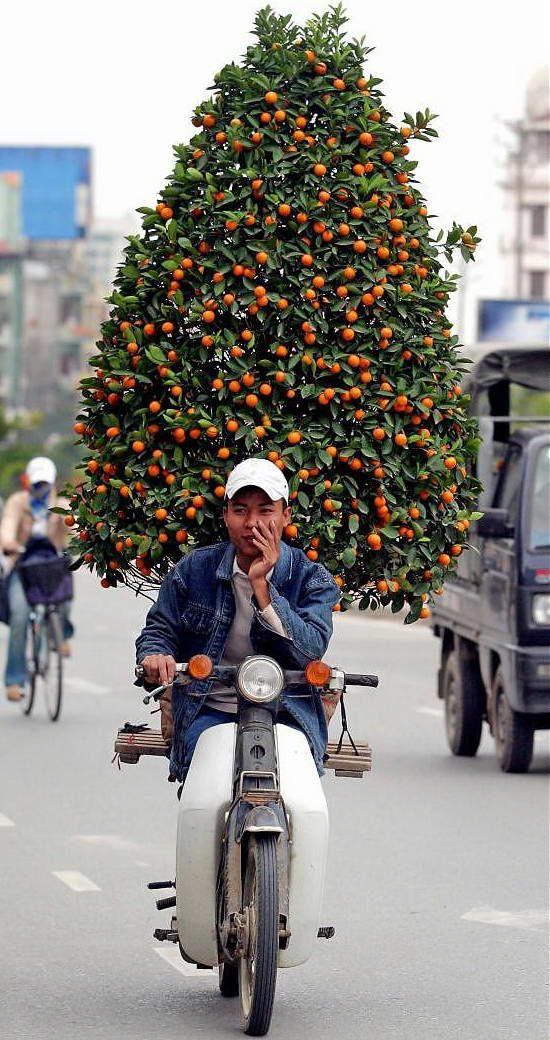 Overloaded. www.urbanrambles.com