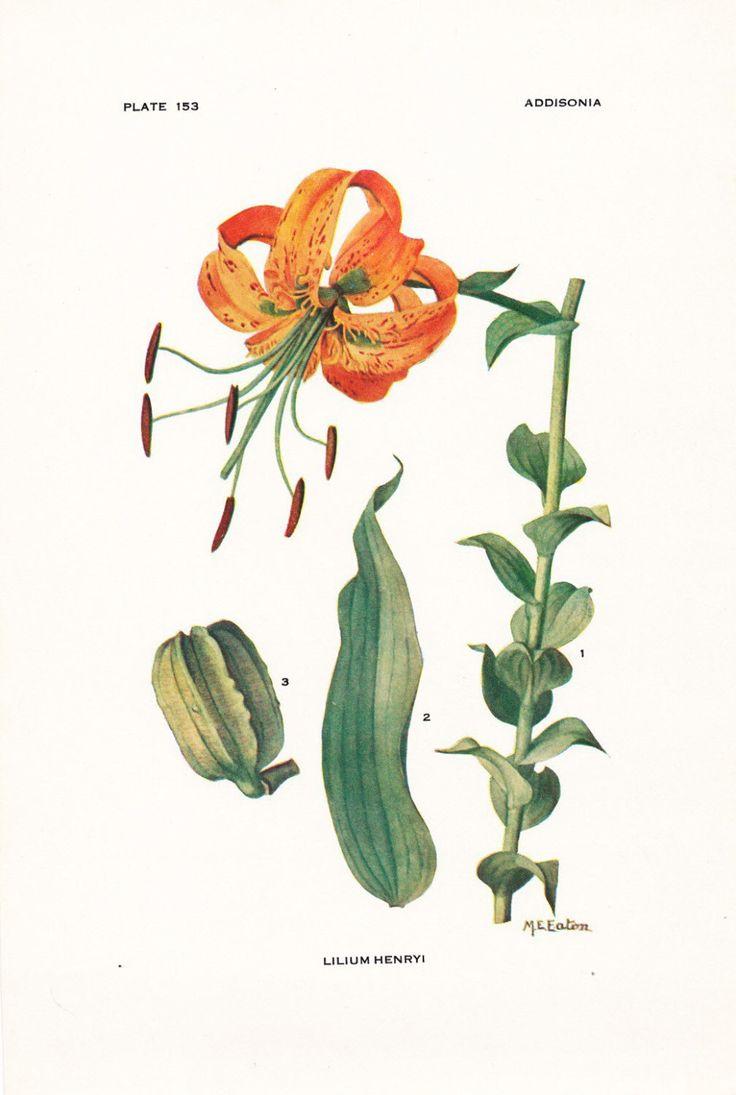 Botany www.tigers.com