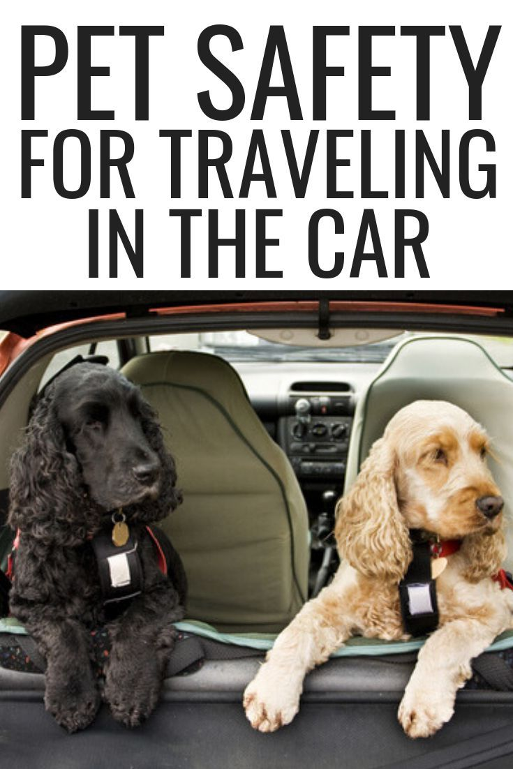 Pet Safety For Traveling In The Car Dog Car Safety Dog Safety Pet Hacks Dog Owners Pet Supplies Dog Dog Owners P Pet Safety Dog Safety Pet Insurance Dogs