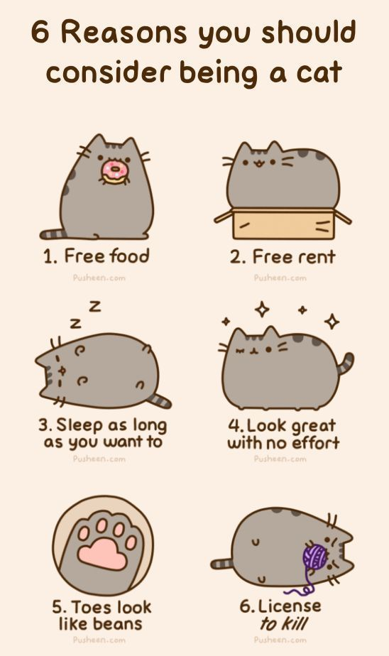 I think I'm gonna be a cat from now on, guys.
