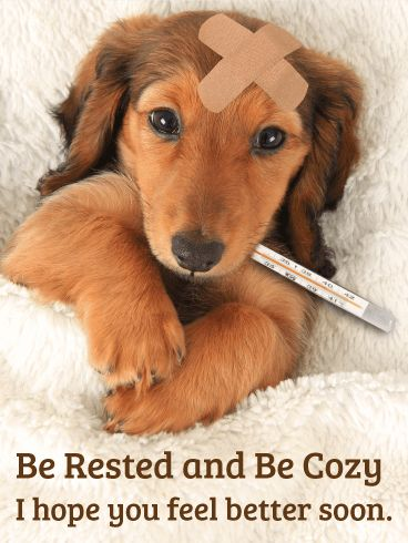 Be Rested and Be Cozy - Get Well Card: Being sick is no fun. If you know someone who is feeling under the weather, send them a lovely Get Well card to help them feel better!   Cute puppies always make things better, so send this puppy card bring a smile to their face. With this sweet Get Well card and wishes, they are sure to start feeling better in no time!