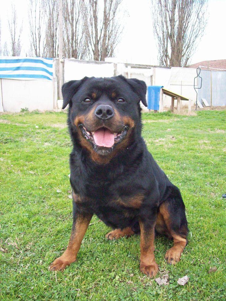 My unforgettable Dog Adolf