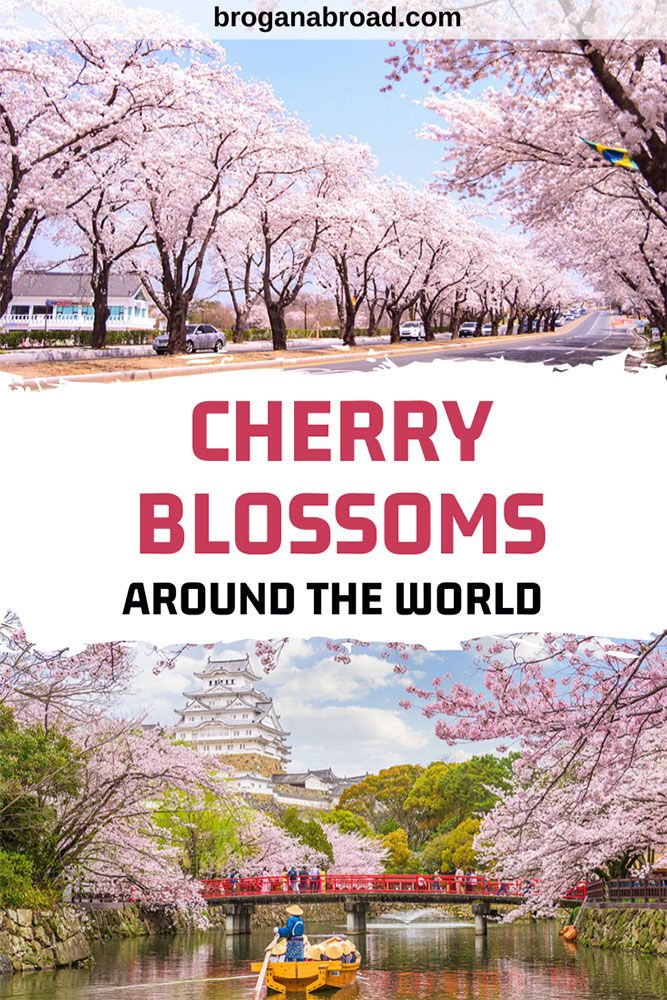 Where To See Cherry Blossoms Around The World Travel Around The World Around The Worlds Cool Places To Visit