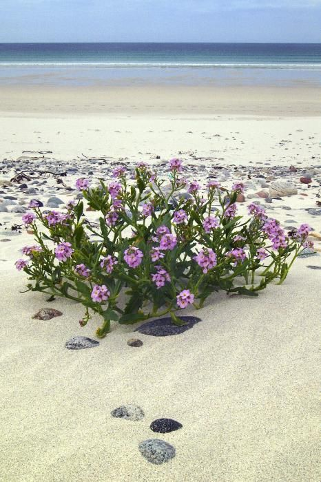 The beautiful white sand beach at Bagh Siar on the island of Vatersay in the Western Isles of Scotland