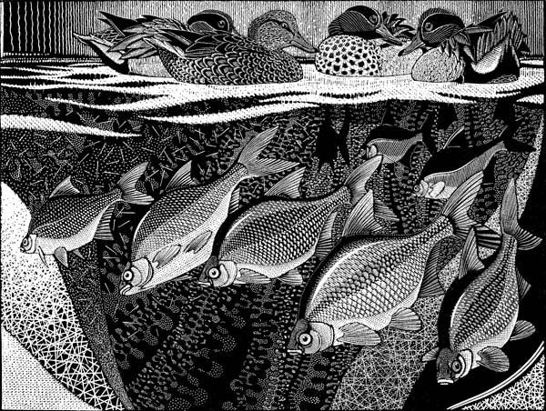 The work of Colin See-Paynton is truly remarkable in its detail and beauty. His Wood Engravings, held in many major collections, display a love and understanding of nature as well as the skill of a master engraver. Colin See-Paynton is a Fellow of the Royal Cambrian Academy, Honorary Fellow of the Royal Society of Painter-Printmakers …