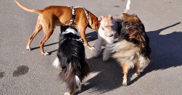 Lasst die Hunde los: Hundewiese offiziell eröffnet  Am Churchill-Quai ist die Leinenpflicht aufgehoben: Die Stadt startete am Montag das zweijährige Pilotprojekt der Hundefreilaufzone. Eine neue Hecke und Schilder sollen ein friedliches Nebeneinander von Hund und Mensch sicherstellen. Die Stadt nimmt...
