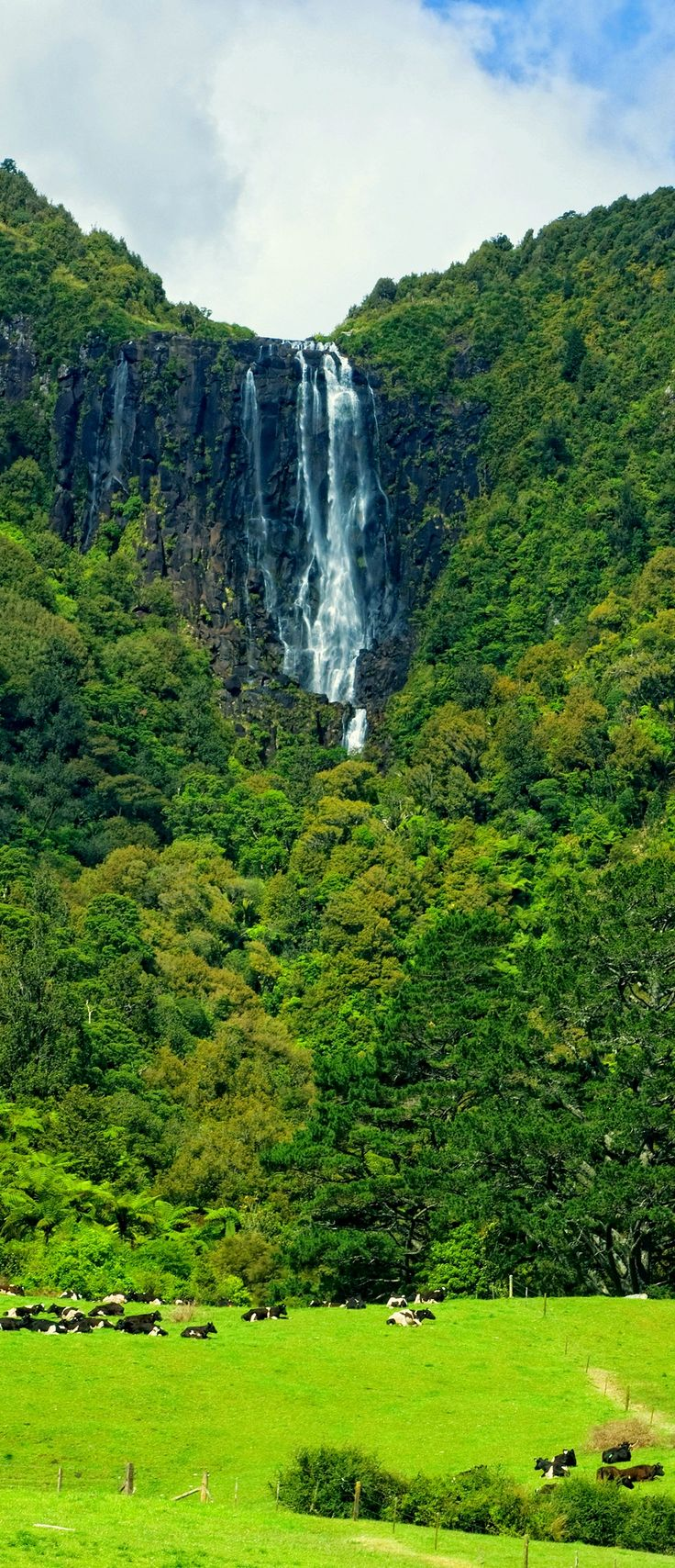 Wairere Falls, Matamata, NZ. Definitely hiked this one a few times.....