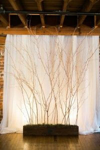 rustic tree branched wedding backdrop