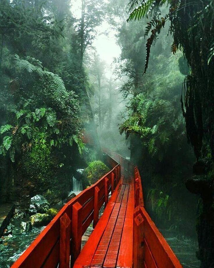 Parque nacional Villarica, chile, 2003
