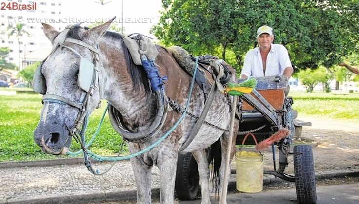 Retrocesso: Justiça suspende proibição de carroças em zona urbana de Taubaté