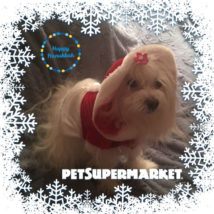Here's my pet holiday card. Create your own with the Holiday Card Workshop by @Pet_Supermarket.